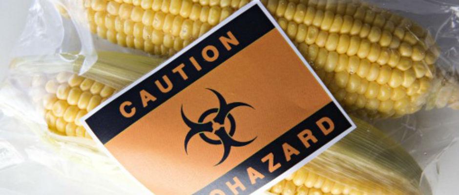 800 Cientistas Exigem o Fim da Experiência OGM