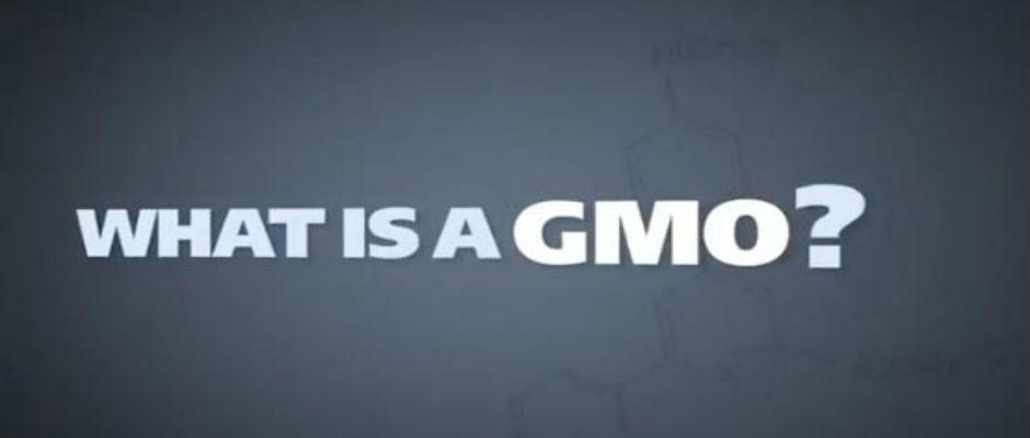Efeitos Colaterais dos OGM
