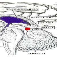 Descalcificação da Glândula Pineal