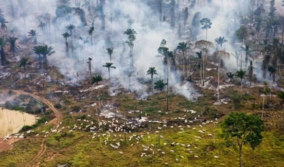 O que os humanos estão realmente a fazer ao nosso planeta, em 19 imagens de cortar a respiração 11