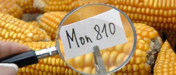 Monsanto é expulsa da Grécia e Letónia - Imposições contra OGM varrem a Europa